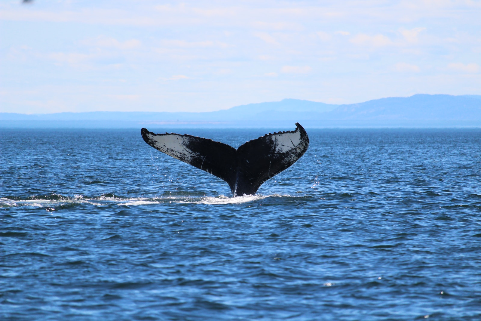 whale jumping over the sea during daytime